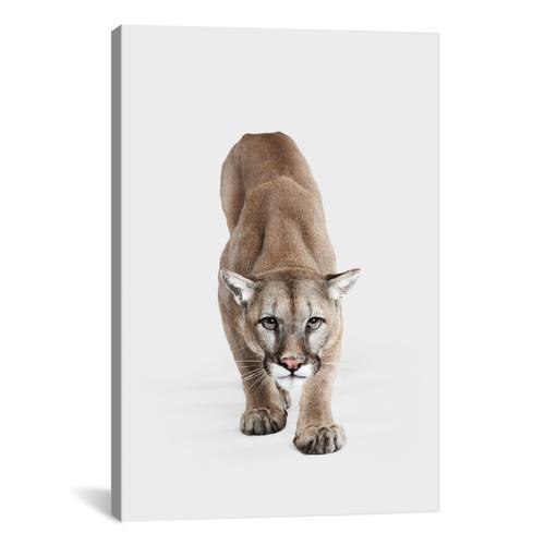 Mountain Lion I