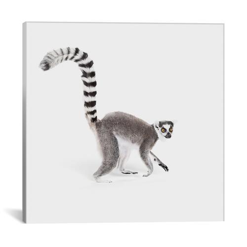 Ring Tailed Lemur I