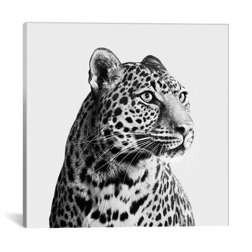 Spotted Leopard II In B&W