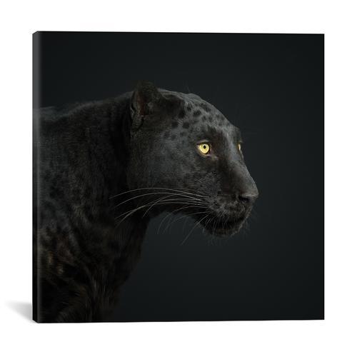 Black Leopard I